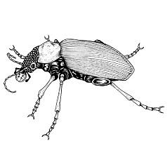 Beetle, Giant: Digital Battle Pod #AKC00004