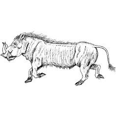 Boar, Wild: Digital Battle Pod #AKC00005