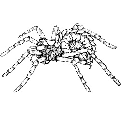 Spider, Armored: Digital Battle Pod #AKC00026