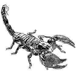 Scorpion, Giant: Digital Battle Pod #AKC00022