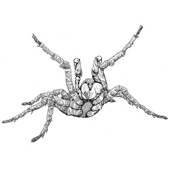 Spider, Giant: Digital Battle Pod #AKC00027